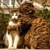 Кошачья любовь навсегда
