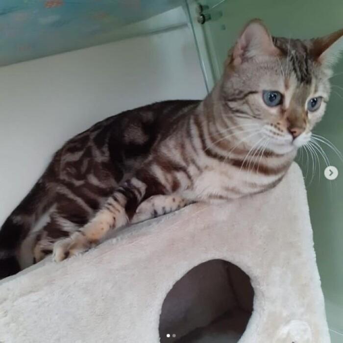 Котофото 145 — Гостиница для кошек «Маркиз»