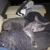 Почему кошки укладываются в ногах у хозяина?