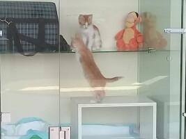 Два ласковых солнечный котенка — Персики — ждут хозяина — Гостиница для кошек Маркиз
