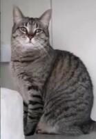 Котофото 120- Гостиница для кошек «Маркиз»