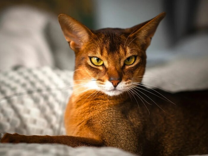 Мозг кошки — особенности восприятия и памяти