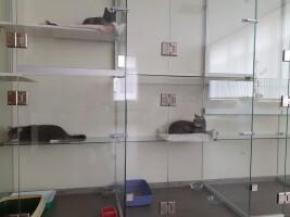 Гостиница для кошек «МАРКИЗ»