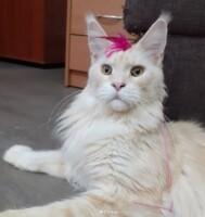 Котофото 116 — Гостиница для кошек «Маркиз»