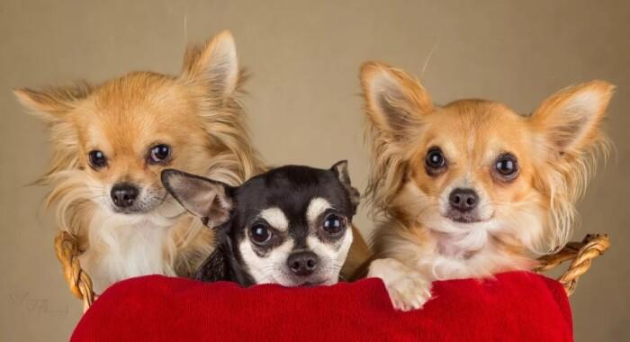 Фото собачка «Багзи и его друзья» — Гостиница для кошек Маркиз