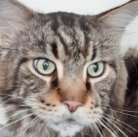 Котофото 93 — Гостиница для кошек «Маркиз»