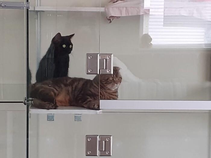 Гостиница для кошек Маркиз Москва — Фото Кото «Васька» и «Барсик»