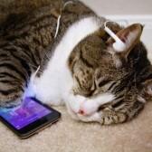 Кошки – уникальные животные