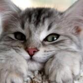 Сколько стоит передержка кошек в Лобне?