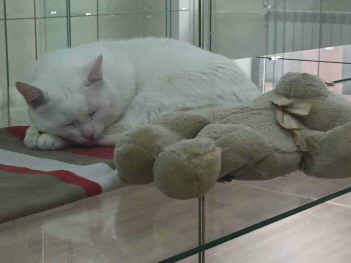 Фото кошки «Ника»