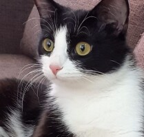 Котофото 131 — Гостиница для кошек «Маркиз»