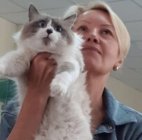 Котофото 106 — Гостиница для кошек «Маркиз»