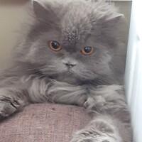 Котофото 62 — Гостиница для кошек «Маркиз»