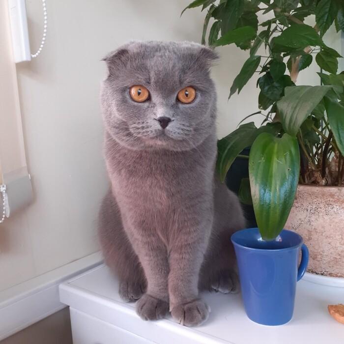 Котофото 70 — Гостиница для кошек «Маркиз»