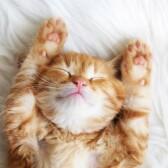 Передержка на время отпуска – Комфорт и уют кото-отель Маркиз