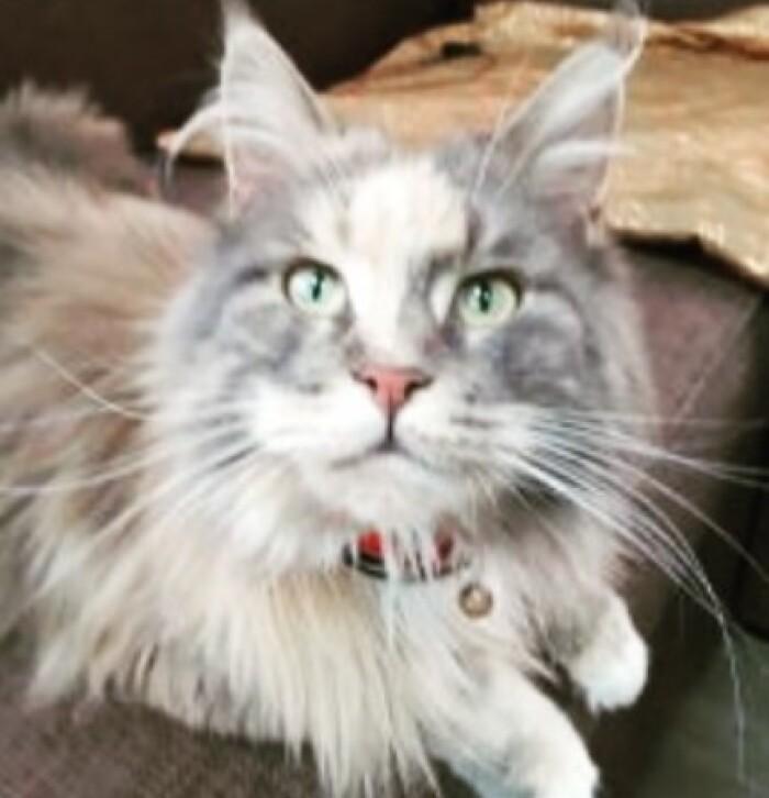 Котофото 98 — Гостиница для кошек «Маркиз»
