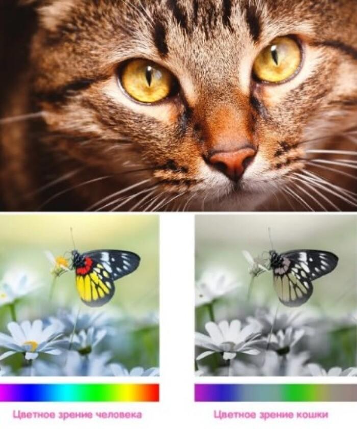 Какие цвета видят коты?