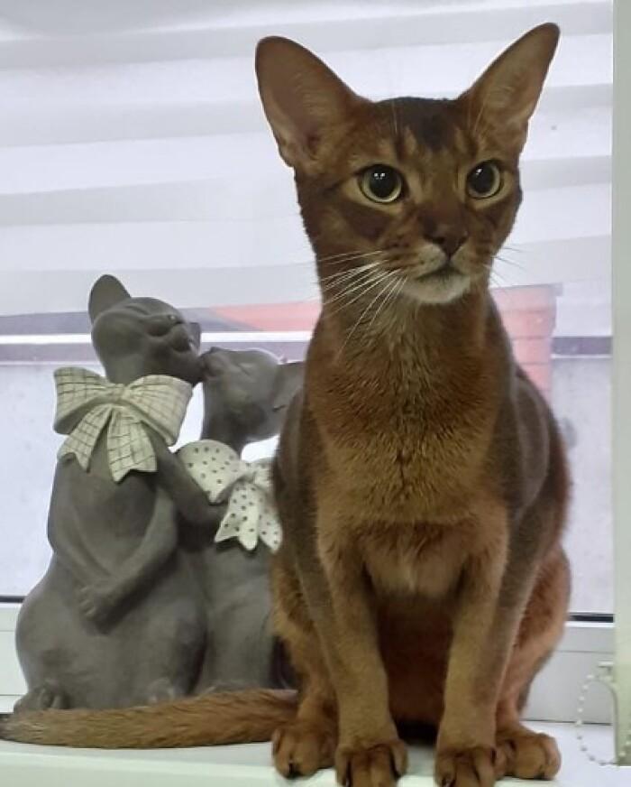Передержка кошек в Лобне