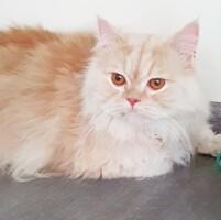 Котофото 107 — Гостиница для кошек «Маркиз»