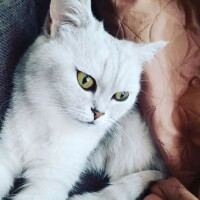 Котофото 51 — Гостиница для кошек «Маркиз»