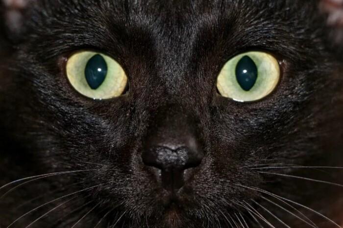 Ночное зрение у кошек