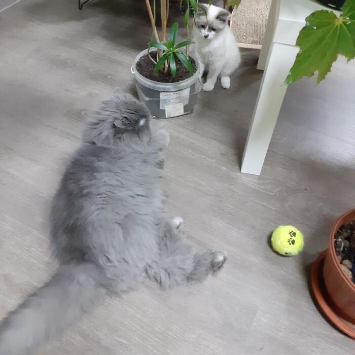 Котофото 63 — Гостиница для кошек «Маркиз»