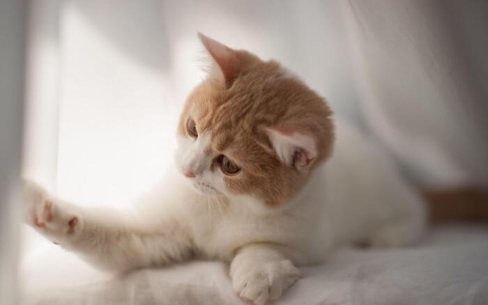 Фото кошки «Cоня»