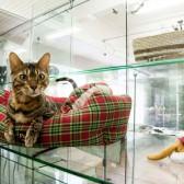 Гостиница для кошек Маркиз Москва — «Маркиза» — постоянный наш посетитель