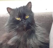 Котофото 129 — Гостиница для кошек «Маркиз»